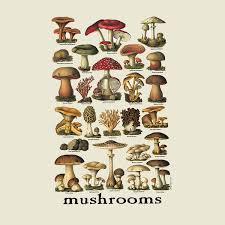 imagesMUSHROOMS